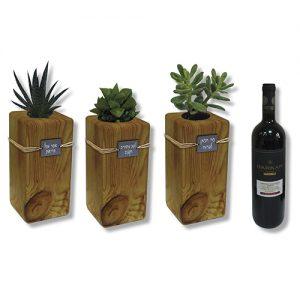 סקולנט בעציץ עץ ויין