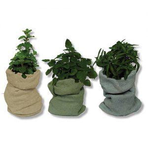 צמח תבלין בבטון דמוי שק